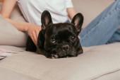 kivágott kilátás fiatal nő megható fekete francia bulldog