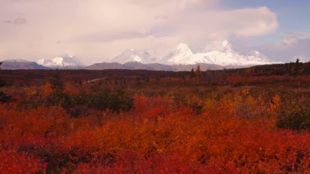 Extrémní ostré podzimní listí v lese poblíž Mt Mckinley