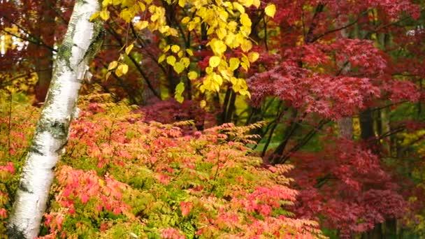 Syté barvy podzim listí javoru bříza Aspen podzimní sezóny