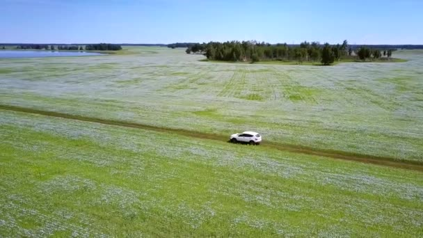 amazing high upper view white car drives along ground road among blossoming buckwheat fields to blue lake