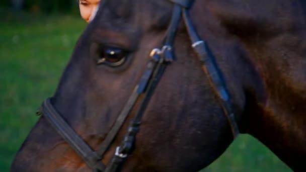 Closeup hezká dívka drží koně tím uzdu lesa
