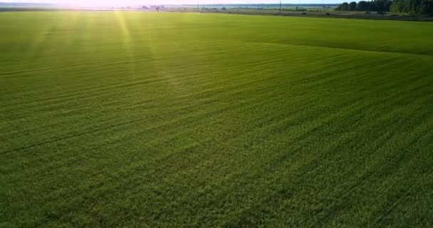 flycam moves low above green field lit by sunset rays