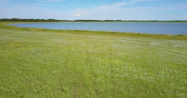 flycam rises above large lake and buckwheat fields