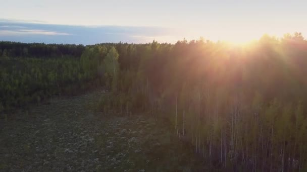 gold sun disk light over sky horizon and dark forest glade