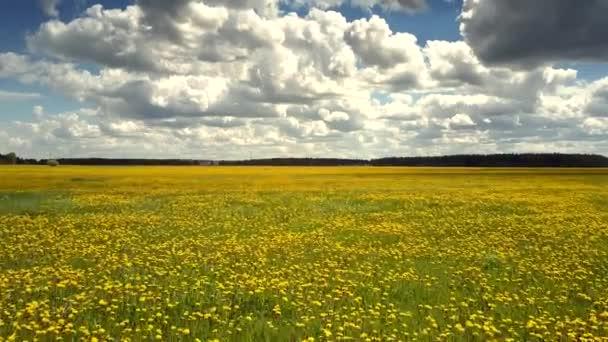 pohyb nad rozlehlou louku s kvetoucí blowballs na slunečný den