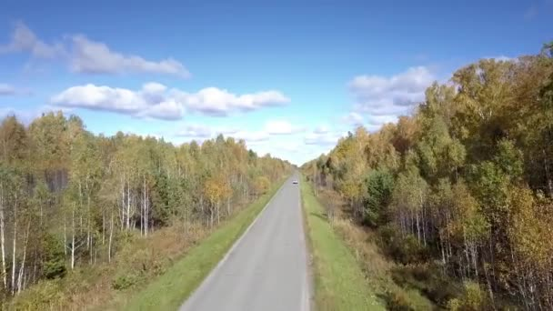 nice aerial view yellow birch woods and distant car on road