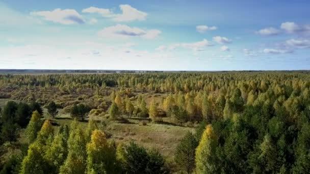 Letecký pohled na obrovské borovice a bříza lesa na slunečný podzimní den