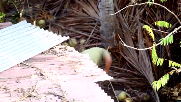 Indian worker cuts down palm branches with chainsaw by roof