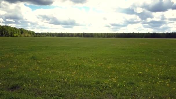 pohyb nad rozlehlým travnatým polem s dandelví skvrnami