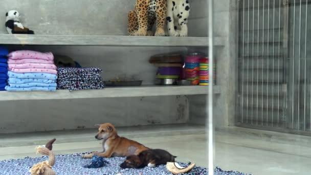klidní psi leží pohromadě v místnosti ohraničené sklem