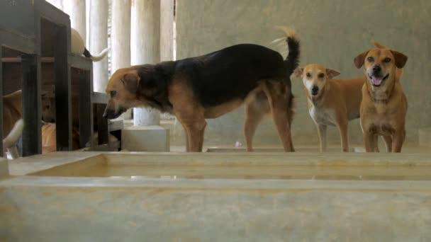 udržovaný Psi žijící v útulku pro zvířata pod zápojem