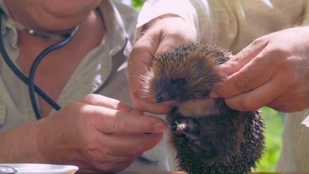 idős emberek tartani és megvizsgálni sündisznó a sztetoszkóppal