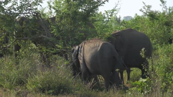hatalmas elefántok gyűlnek össze zöld fa árnyék rázza fül
