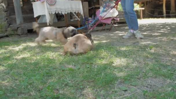 Kis barna kutyák ugrás játszik zöld fű közelében tulajdonos