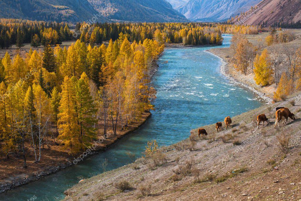 Mountains landscapes, Altai Republic, Russia.