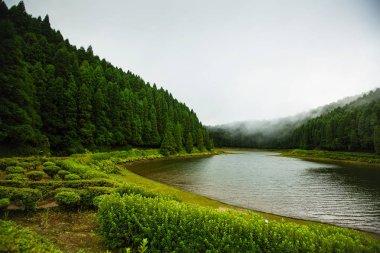 "Картина, постер, плакат, фотообои ""вид на озеро с туманом, ползущим по воде. азорский архипелаг цветы природа программа"", артикул 217654468"