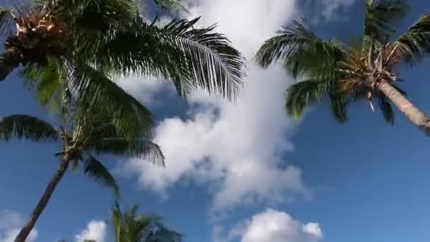 Tagsüber Palmen und blauer Himmel