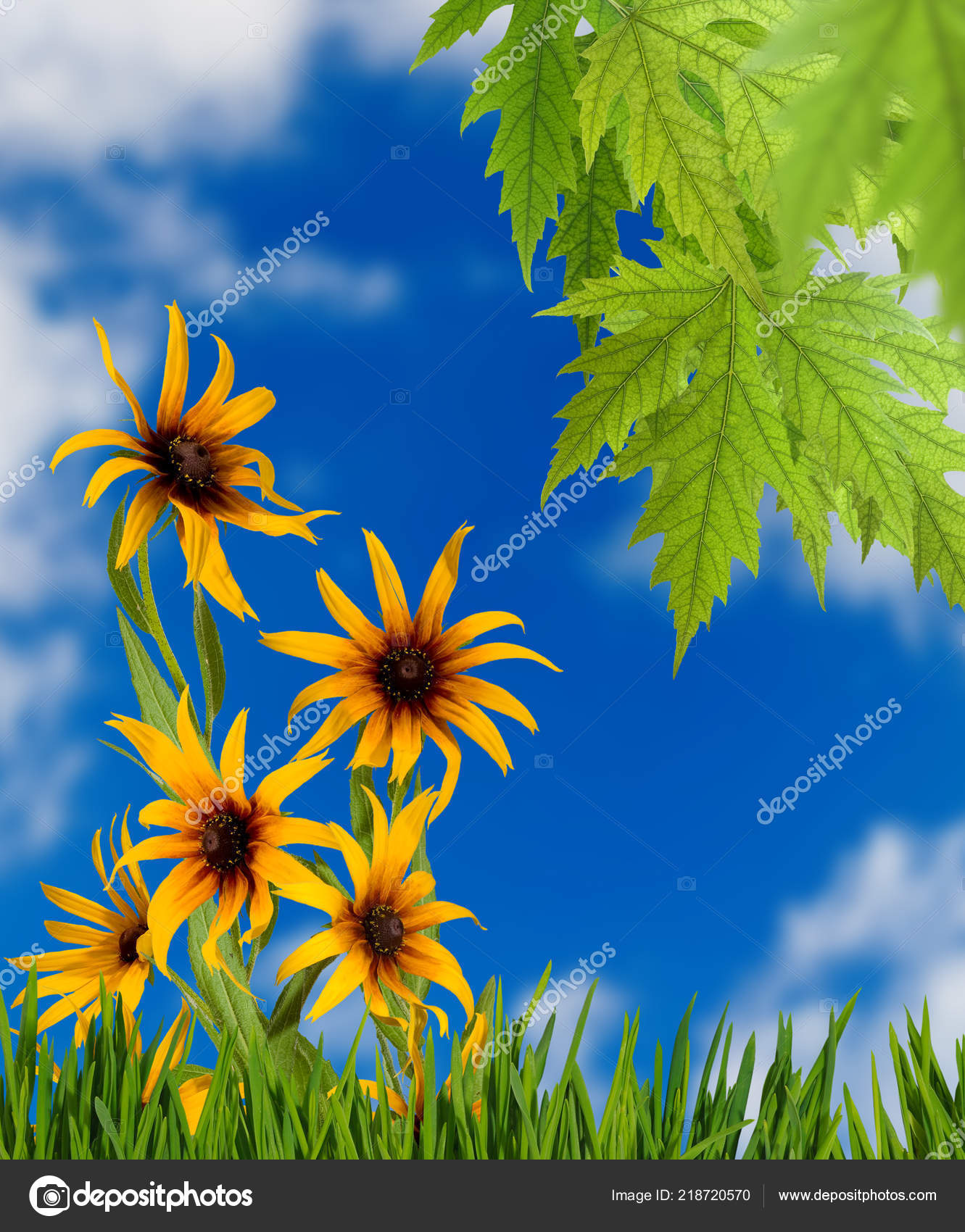 Image Beautiful Flowers Park Stock Photo Cooperr007 218720570