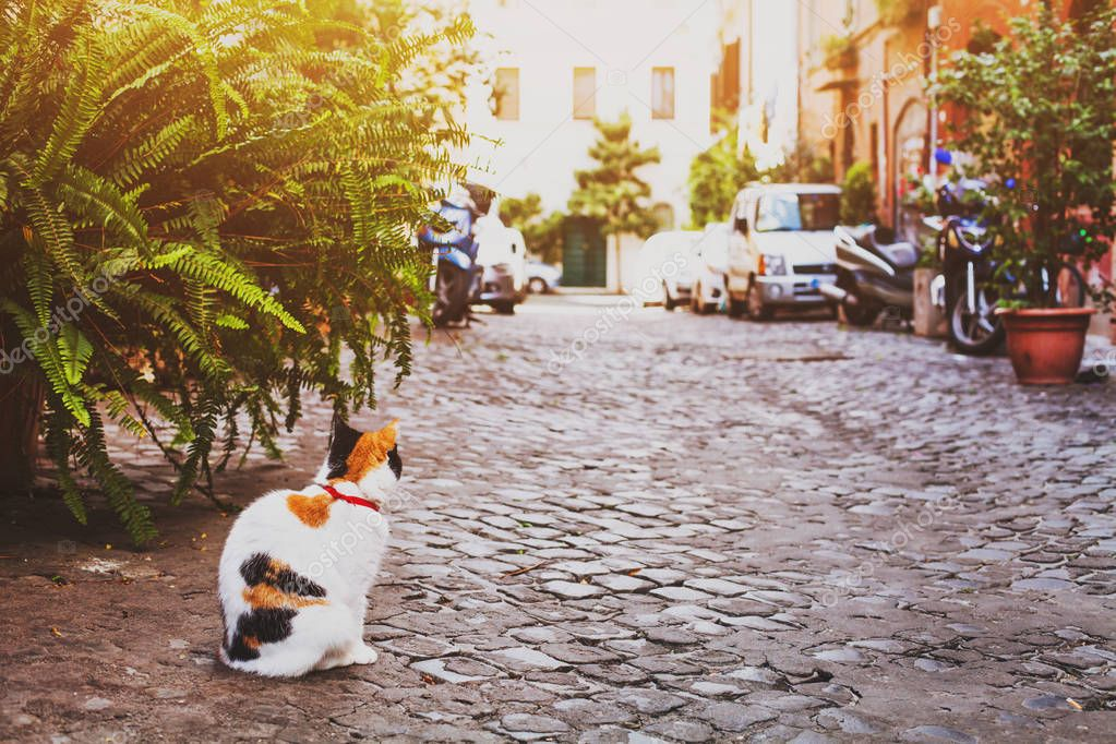 cat on the street in Rome, Italy