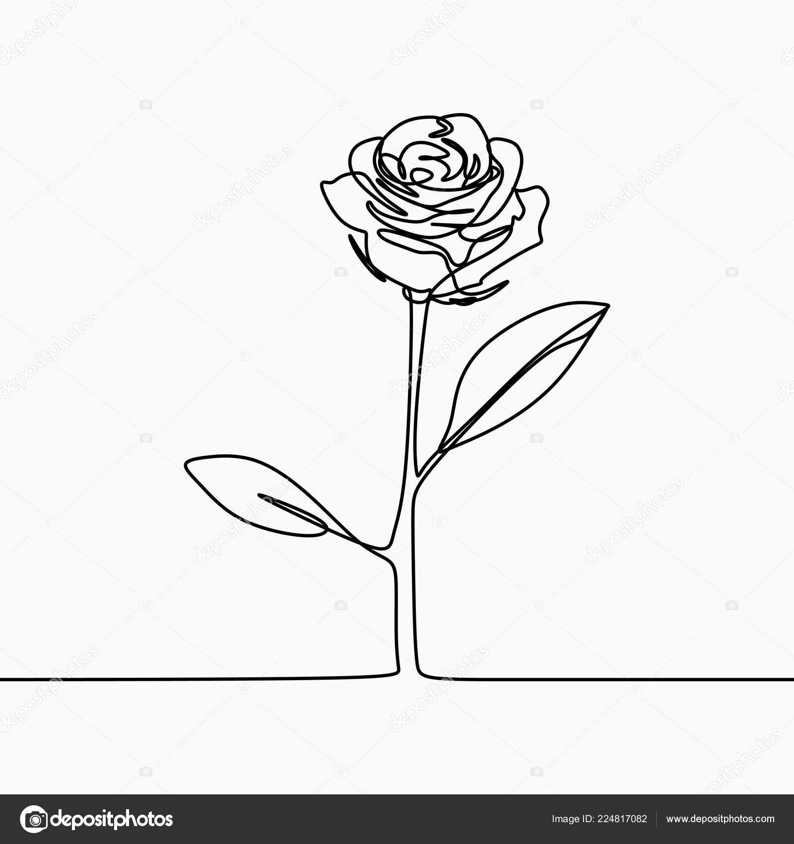 One Line Drawing Rose Flower Minimal Modern Simple Design