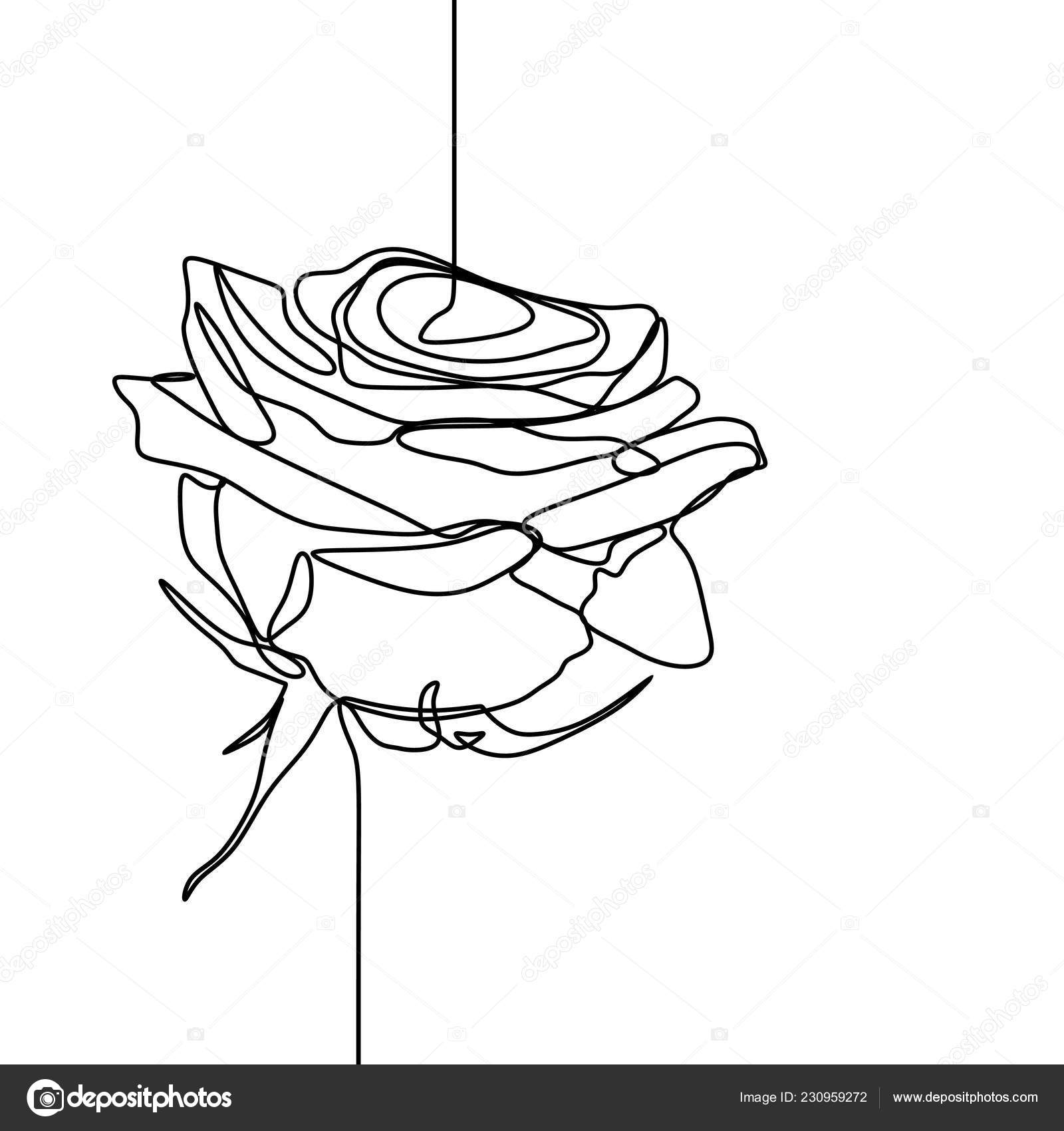 One Line Drawing Rose Flower Minimalist Design Isolated White