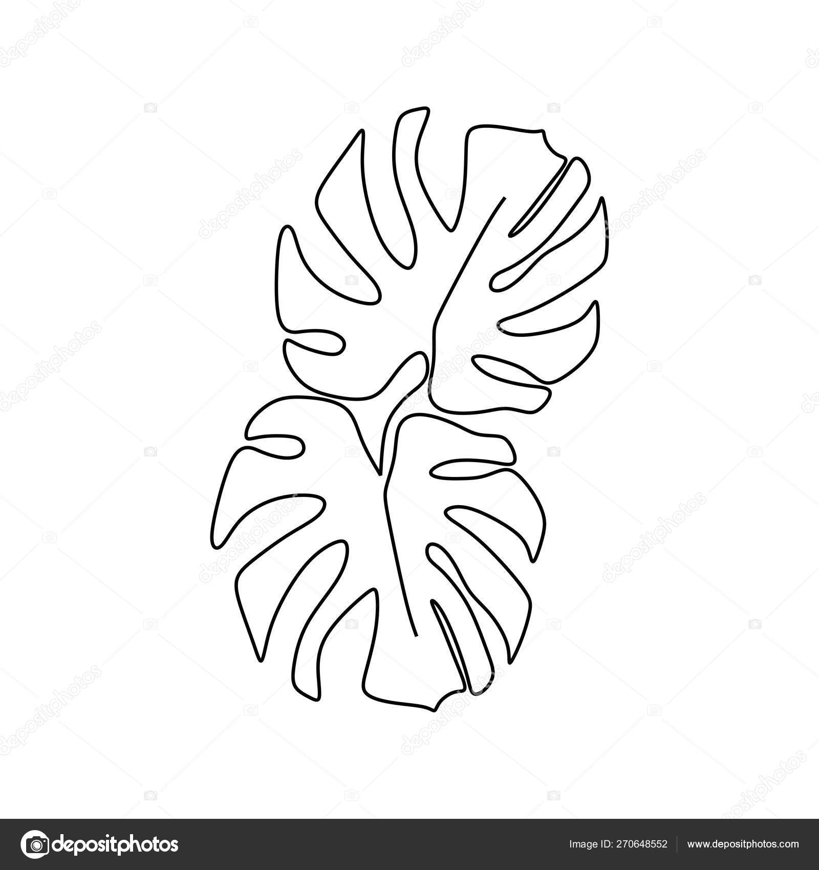 Monstera Delicosa Plant Leaves Continuous One Line Drawing Minimalist Design Simple Minimalism Style On White Background Vector Image By C Ngupakarti Vector Stock 270648552