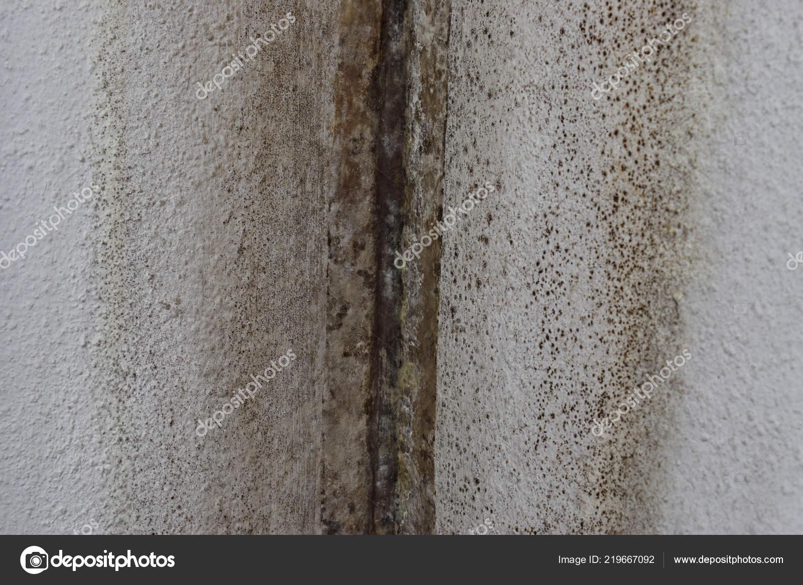 Beliebt Dem Haus Pilz Der Wand Vor Feuchtigkeit Reparieren — Stockfoto RV12