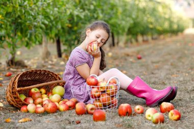 Portrait of little schoool girl in colorful clothes and rubber gum boots with red apples in organic orchard. Adorable happy healthy baby child picking fresh ripe fruits from trees and having fun stock vector