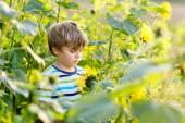 Adorabile ragazzino biondino su estate girasole allaperto di campo. Carino bambino prescolare divertendosi sulla calda serata destate al tramonto. Bambini e natura