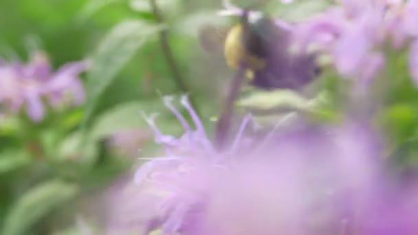 Venku opylovač čmeláků