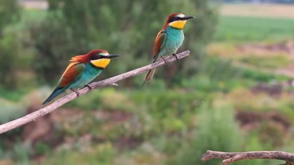 beautiful wild birds sitting on a branch