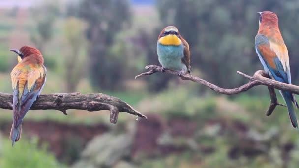 Exotičtí ptáci sedí na větvích a zpívat