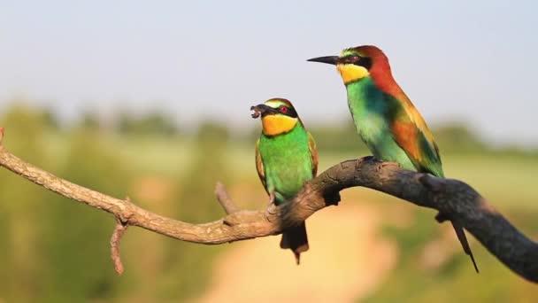 wild birds make a wedding ceremony, wildlife, animals and birds