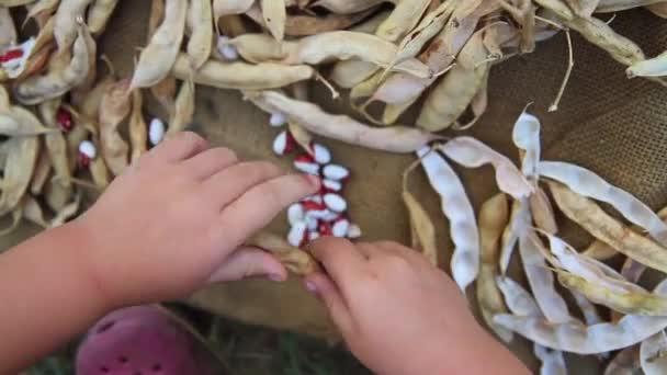 gyermek kezét tiszta és száraz bab