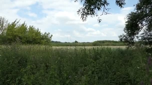 typical summer time meadow landscape at Havel river in Havelland (Germany).