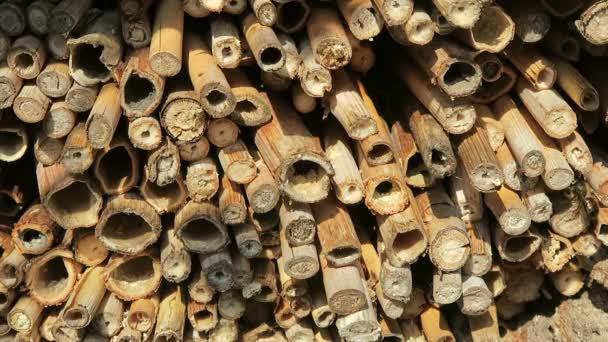 divoké samotářské včely létání hmyzu Hotel hledají samice včely. Osmia natans a Osmia caerulescens