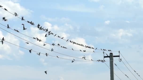 Ptáci sedí na dráty a odletět