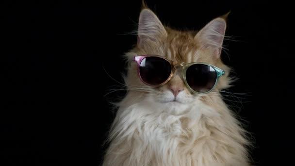 gyönyörű cool disco macska-napszemüveg