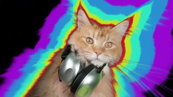 Beautiful cool disco cat with headphones  Intentional overlayed video  distortion and glitch effects