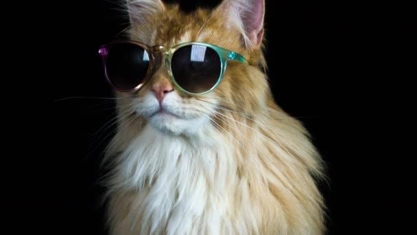 szép hűvös macska napszemüveg jelentő és nézett körül