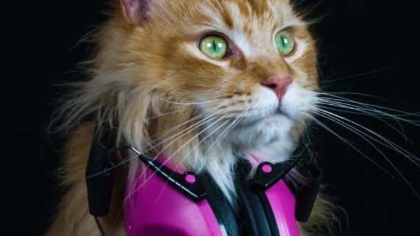 szép hűvös macska jelentő lila fejhallgató