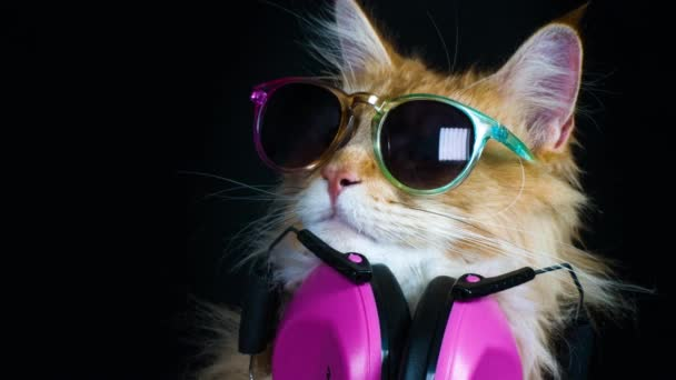 Con Hermoso Gafas — Sol Auriculares Stock Vídeos Gato Fresco De RL54Aj