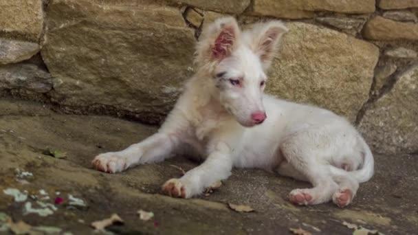 Border-Collie Welpen Hund an einem heißen Sommernachmittag entspannen