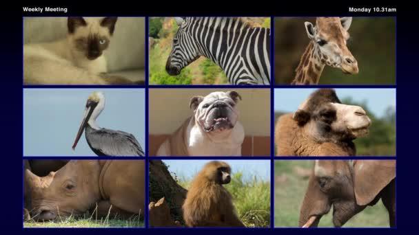 video různých zvířat, která mají videokonferenci