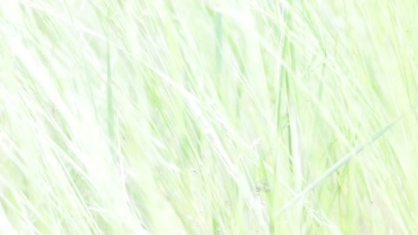 Detailní pohled krásné zelené trávy trávy ve větru, přírodní pozadí