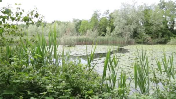 krásný rybník s klidnou vodou a zelené stromy, malebné přírodní pozadí