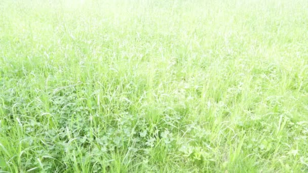 close-up view of beautiful natural background with grass in wind