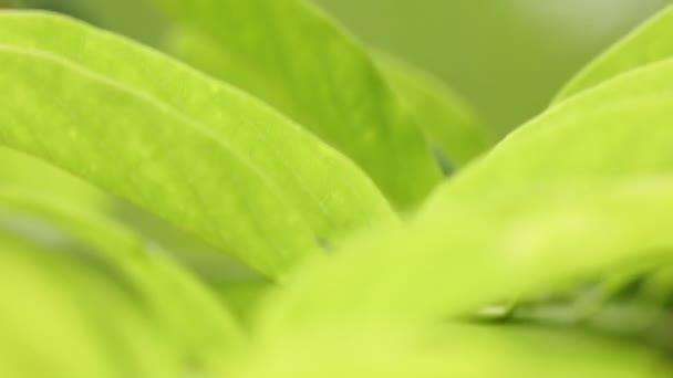 zöld levelek mozgó szél Park