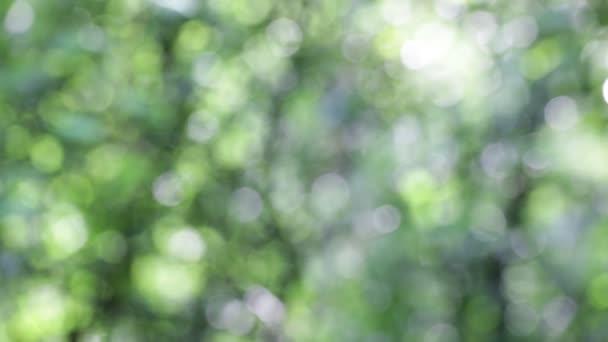 rozostření listy v pozadí abstarct vítr a světlo