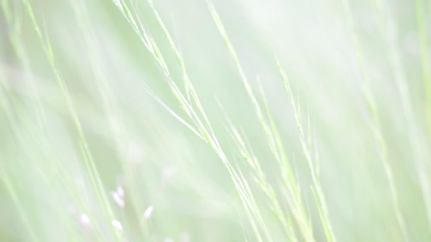 close-up view of beautiful green grass grass in the wind, natural background